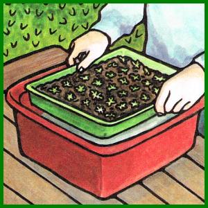 Anzucht von Beetpflanzen, viele Sorten und Farben