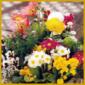 Ausgefallene Blumenkübel für Garten und Balkon