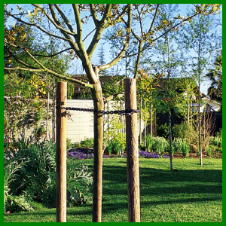 Baumstützen sind für jeden frisch gepflanzten Baum zu empfehlen