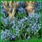 Blausternchen, zierliche Glöckchen und hübsche Farben