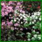 Blütensträucher für Rabatten mit exotisch wirkenden Blüten