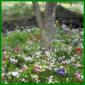Blumenbeete unter Bäumen, mit zauberhafte Blütenpflanzen