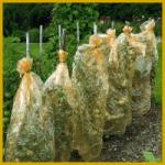 Gartenfolien, ein ideales Wuchsklima zum Frühernten