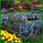 Formaler Bauerngarten mit Gemüse, Kräutern und Blumen