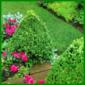 Formschnitt für Ihre Pflanzen
