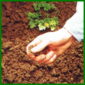 Gartenbodenprüfung, Struktur, pH-Wert und Wasserabfluß testen