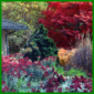 Herbstfarben, der letzte Höhepunkt im Gartenjahr