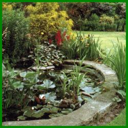 Gartenteich, ein magischer Anziehungspunkt