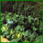 Gemüsebeet anlegen im Herbst oder Winter