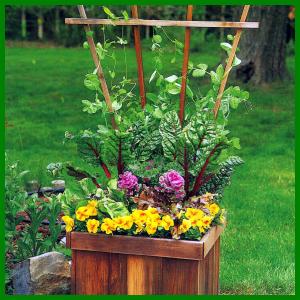 Pflanzkübel, um Gemüse vorzuziehen