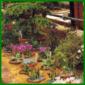 Zierpflanzen und Blühpflanzen im Gewächshaus