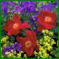 Grundlegendes über Giftpflanzen