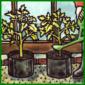 Tomaten unter Glas mit verschiedenen Methoden anbauen