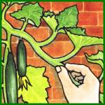 Gurkengewächse, gibt es in vielen Sorten
