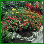 Hochbeet, auch an ungeeigneten Standorten Blumen ansiedeln