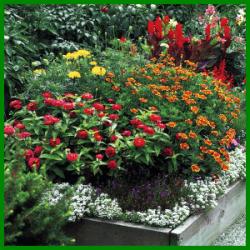 Hochbeet Auch An Ungeeigneten Standorten Blumen Ansiedeln