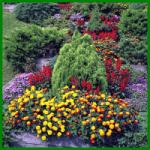 Immergrüner Garten durch wechselnde Bepflanzungen