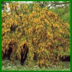 Kalkhaltiger Gartenboden hat einen hoher pH - Wert