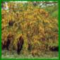 Kalkhaltiger Gartenboden hat einen hoher pH – Wert
