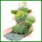 Aromatische Kräuter, können Sie mit vielen Pflanzen kombinieren