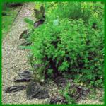 Die verschiedenen Kräuterpflanzen