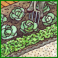 Gartenkräuter im Garten züchten