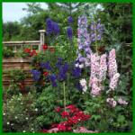 Ländliches Beet, mit traditionellen Blumen