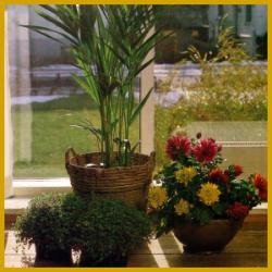 mehltau bei pflanzen erfolgreich vorbeugen und verhindern. Black Bedroom Furniture Sets. Home Design Ideas