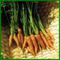 Möhren, knackiges und vitaminreiches Gemüse
