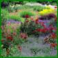 Naturnaher Garten, eine romantische Oase