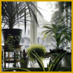 Nordfenster, Zimmerpflanzen, Pflanzenauswahl