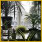 Zimmerpflanzen die für Nordfenster geeignet sind, Pflanzenauswahl