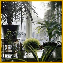 Gartenschlumpf zimmerpflanzen die f r nordfenster for Spezielle zimmerpflanzen