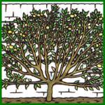 Obstbaum im Garten anbauen