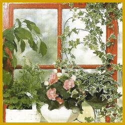 Ostfenster, Westfenster, Zimmerpflanzen