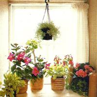 Ostfenster