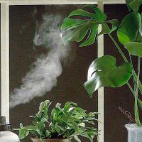 Pflanzen für trockene Heizungsluft
