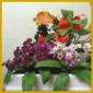 Pflanzen für dunkle Räume, Lichtbedürfnis der Zimmerpflanzen
