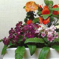 Pflanzen für dunkle Räume