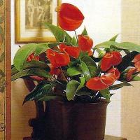 Pflanze Für Dunkle Räume : pflanzen f r dunkle r ume lichtbed rfnis der zimmerpflanzen ~ A.2002-acura-tl-radio.info Haus und Dekorationen