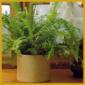 Pflanzen für trockene Heizungsluft, Pflege und Tipps