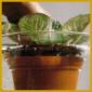 Pflanzenkrankheiten, auf die Bedürfnisse Ihrer Pflanze achten