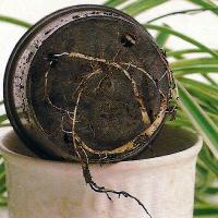 Pflanzenkrankheiten vorbeugen, erkennen
