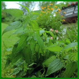 Pflanzenjauchen schützen Ihren Garten