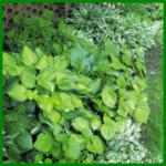 Randbepflanzung in Grün, reizvoll und elegant