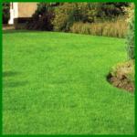 Vorbereitung der Rasenfläche und Planung
