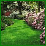 Rasentypen und Rasenmischungen für den Garten