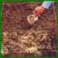 Rasen aussäen, den richtigen Zeitpunkt auswählen