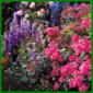 Rosenpartner, Begleitpflanzen für Rosen