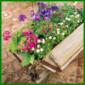 Eine Rustikale Holzschubkarre Bepflanzen